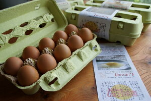 【ふるさと納税】ゆっくり育てた地鶏の初産みたまご40個セット
