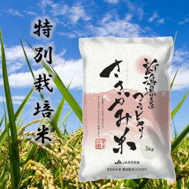 【ふるさと納税】 特別栽培米 コシヒカリ ささかみ米 10kg