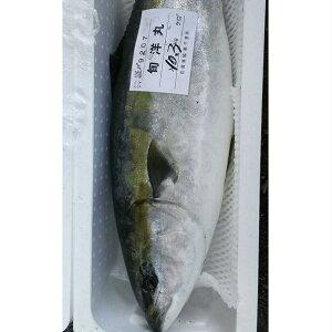 【ふるさと納税】寒ブリ  8〜9kg 【魚介類】 お届け:2019年12月25日〜2020年1月31まで