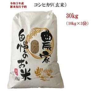 【ふるさと納税】《令和3年産米 先行予約》玄米 コシヒカリ 30kg 新潟県 聖籠産