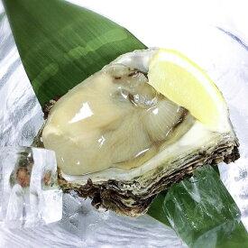 【ふるさと納税】新潟県産 天然岩牡蠣(生食用)