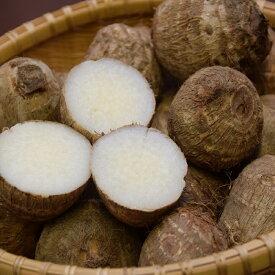 【ふるさと納税】砂里芋(さりいも) 3L 5kg ブランド 里芋 新潟県 聖籠産