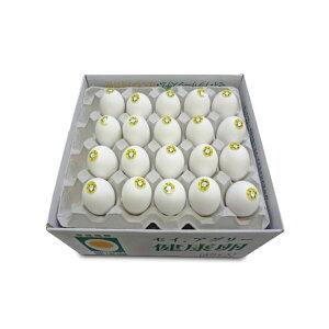 【ふるさと納税】セイアグリー健康卵 40個入り たまご 玉子 鶏卵 セット 【卵・鶏卵・たまご】