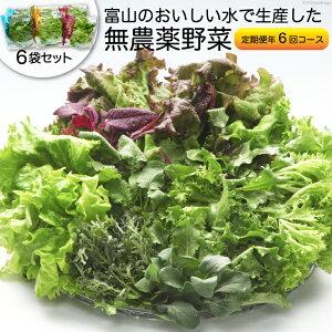 【ふるさと納税】富山のおいしい水で生産した無農薬野菜(6袋)の定期便年6回コース