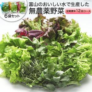 【ふるさと納税】富山のおいしい水で生産した無農薬野菜(6袋)の定期便年12回コース