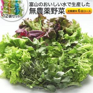 【ふるさと納税】富山のおいしい水で生産した無農薬野菜(12袋)の定期便年6回コース