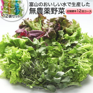 【ふるさと納税】富山のおいしい水で生産した無農薬野菜(12袋)の定期便年12回コース