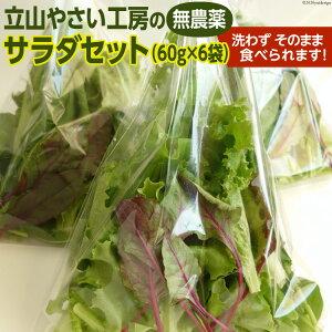 【ふるさと納税】立山やさい工房のサラダセット(60g×6袋)【野菜類/セット・詰合せ】