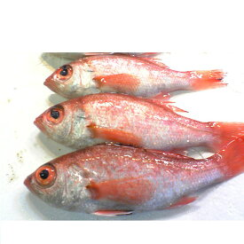 【ふるさと納税】魚介類/高級魚「のどぐろ」2匹又は3匹セット 朝採れ 鮮魚 下処理済み