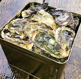 【ふるさと納税】能登牡蠣 殻付牡蠣 半缶/約5kg(約40〜50個) 専用ナイフ 片手用軍手付 /世界農業遺産「能登の里山里海」※必ず加熱して食べてください※2020年1月より順次発送
