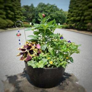 【ふるさと納税】季節の寄せ植えセット