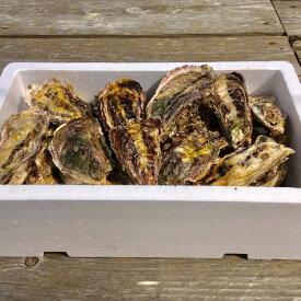 【ふるさと納税】能登牡蠣 殻付 牡蠣 約3.5kg(約30個)専用ナイフ、片手用軍手付 ※加熱用※2020年1月以降に順次発送予定