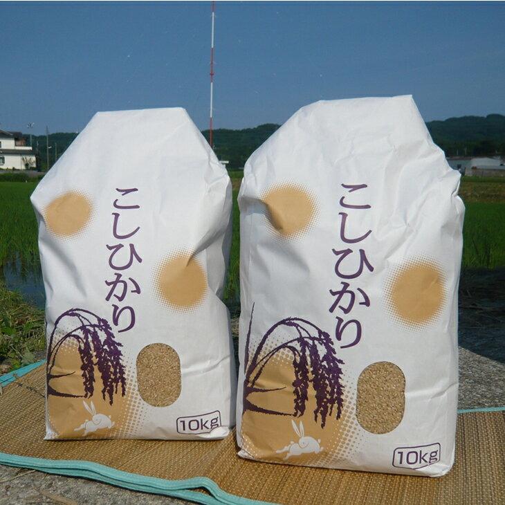 【ふるさと納税】【定期便】七尾産こしひかり 玄米10kg×2回(毎月お届け)※10月より順次発送