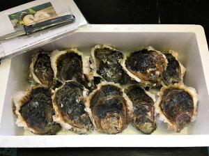 【ふるさと納税】能登産岩牡蠣(2.5kgセット/8〜10個入)
