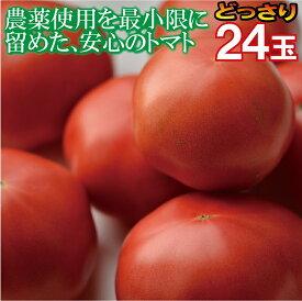 【ふるさと納税】010010. 小松とまと(24個)詰合せ