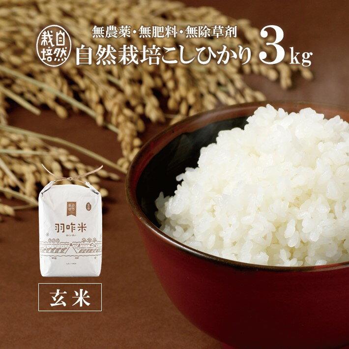 【ふるさと納税】[A017] 【無農薬】【玄米】能登のこだわり自然栽培こしひかり『羽咋米』 3kg(3kg×1袋)