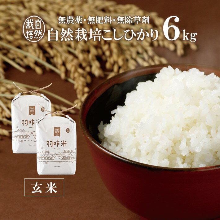 【ふるさと納税】[A019] 【無農薬】【玄米】能登のこだわり自然栽培こしひかり『羽咋米』 6kg(3kg×2袋)