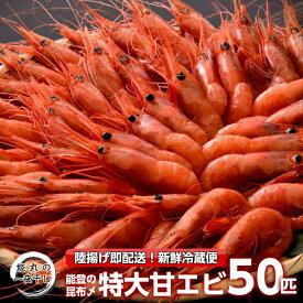 【ふるさと納税】[D023] 姫丸の昆布〆特大甘エビ50匹(獲れたて鮮度抜群!まるごと昆布〆!)