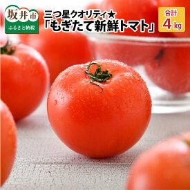 【ふるさと納税】三つ星クオリティ☆坂井の大自然が育てた、もぎたて新鮮トマト