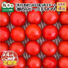 【ふるさと納税】【定期便 4回コース】「越のルビー」 ミディトマト5パック × 4回 (2021年5月〜8月発送)トマト嫌いでもつい食べてしまうフルーツみたいなトマト!【先行予約・2021年5月発送開始予定】