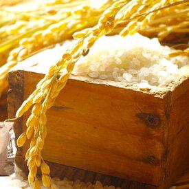 【ふるさと納税】令和2年度 永平寺町産 コシヒカリ 5kg 【お米・コシヒカリ】