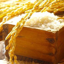 【ふるさと納税】令和2年度 永平寺町産 コシヒカリ 10kg 【お米・コシヒカリ】