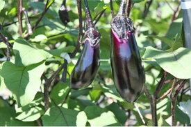 【ふるさと納税】 ナス 茄子 千両茄子 なす 野菜 5kg 送料無料