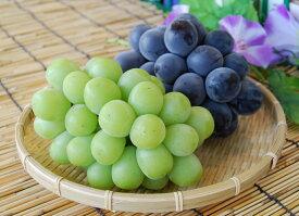 【ふるさと納税】 ブドウ ピオーネ シャインマスカット セット ぶどう 食べ比べ 山梨 2房 1.2kg以上 送料無料