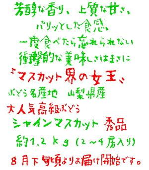 【先行予約】【大人気】山梨県産厳選シャインマスカット秀品約1.2kg
