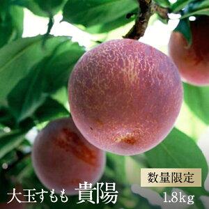 【ふるさと納税】すもも 貴陽 大玉 約1.8kg 先行 予約 令和 2年産 1.5-1-10