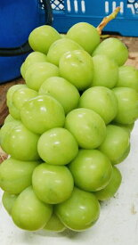 【ふるさと納税】シャインマスカット 特秀品限定!1.2kg 2房 産地直送 山梨県産 フルーツ ぶどう