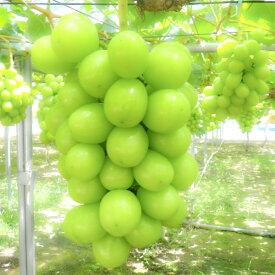【ふるさと納税】シャインマスカット 3〜5房 約2.5kg 果物好きなあなたへ! 産地直送 山梨県産 フルーツ ぶどう