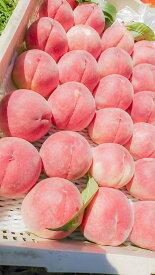 【ふるさと納税】桃 2.5kg以上 6-8玉入 日本一の桃をあなたへ!山梨県産 高級 フルーツ 産地直送 (クラウドファンディング対象)