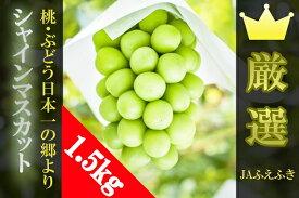 【ふるさと納税】シャインマスカット 1.5kg以上 JAふえふき <数量限定> 2〜3房 高級 フルーツ ぶどう