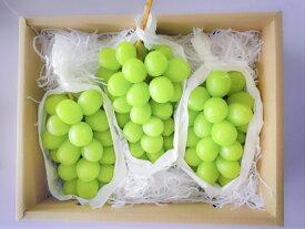 【ふるさと納税】シャインマスカット 2〜3房 約1.3kg 果物好きなあなたへ! 産地直送 山梨県産 ぶどう フルーツ