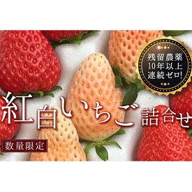 【ふるさと納税】【先行受付】紅白いちご詰合せ24個入り【10年以上残留農薬ゼロ】 【果物類・いちご・苺・イチゴ】 お届け:2020年12月上旬〜2021年3月20日