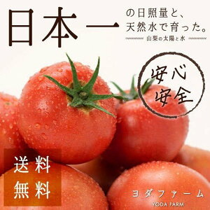 【ふるさと納税】安心安全、採れたてを発送!桃太郎トマト約2kg 化粧箱で発送。贈答用にもオススメ。※4月中旬より順次発送予定。