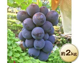 【ふるさと納税】No.014 秀品!濃厚 山梨県産種なしピオーネ 約2kg 果物 フルーツ ぶどう