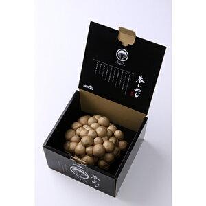【ふるさと納税】一株本しめじ(350g) 【野菜・きのこ・シメジ・キノコ】
