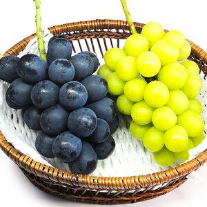 【ふるさと納税】【先行予約】長野市産ナガノパープル・シャインマスカット詰め合せ(特秀)2房 【マスカット・フルーツ・果物類・ぶどう・巨峰】 お届け:2020年9月中旬〜2020年9月下