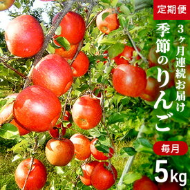 【ふるさと納税】【2021年10月〜12月連続お届け】季節のりんご 約5kg 3か月連続お届け(10〜12月) 【定期便・果物類・林檎・りんご・リンゴ・3ヶ月・3回】 お届け:2021年10月中旬〜2021年12月中旬