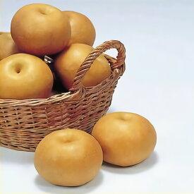 【ふるさと納税】≪秋頃より発送≫梨(南水)約5kg《村石果樹園》【果物・フルーツ・梨】