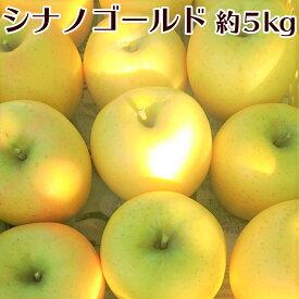 【ふるさと納税】鮮やかなレモン色が美しい!シナノゴールド 約5kg《市川ファーム》■2021年発送■※10月中旬頃より順次発送予定 果物類・林檎・りんご・リンゴ