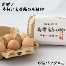 【ふるさと納税】新鮮!平飼い烏骨鶏の有精卵 (6個パック×4)《タナカファーム》 鶏卵 烏骨鶏 うこっけい