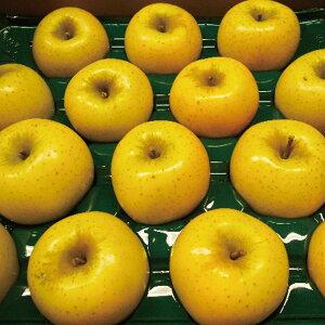 【ふるさと納税】【先行予約】≪10月上旬〜順次発送≫朝採りシナノゴールド(林檎) 5kg【果物類・フルーツ・りんご・リンゴ】