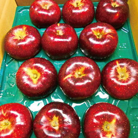 【ふるさと納税】【先行予約】≪10月上旬〜順次発送≫朝採り秋映(林檎) 5kg 【果物類・フルーツ・リンゴ・りんご】