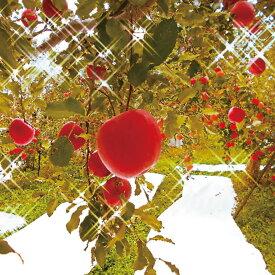 【ふるさと納税】【先行予約】≪11月上旬〜順次発送≫朝採りサンふじ(林檎) 5kg【果物類・フルーツ・リンゴ・りんご】