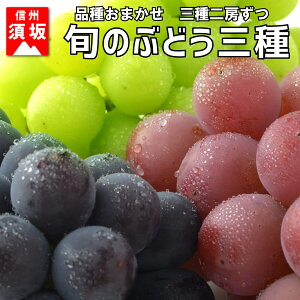 【ふるさと納税】☆先行予約【旬のぶどう】3種類詰合せセット(3種各2房) 【果物・ぶどう・フルーツ】