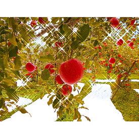 【ふるさと納税】【先行予約】朝採りサンふじ(林檎) 【果物類・フルーツ・リンゴ・りんご】 お届け:2019年11月上旬〜11月下旬