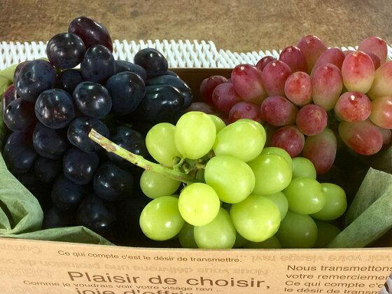 【ふるさと納税】皮ごと食べられるブドウ詰合せ約2kg 3〜4房 【果物・ぶどう・フルーツ】 お届け:2019年9月15日〜10月10日